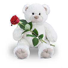 enkele roos met witte beer